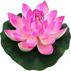 Haryana State Flower